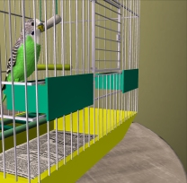 Tae's pet budgie