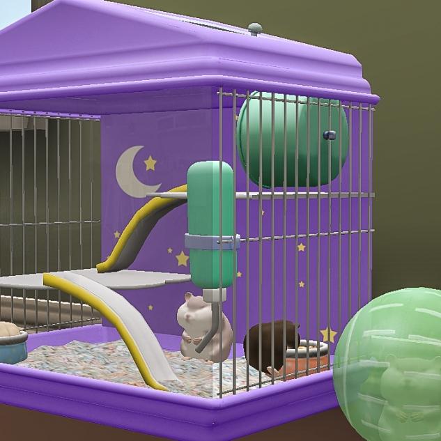 New Hamster family