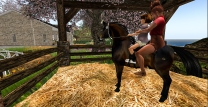 Taelor getting Cocoa out of the stable