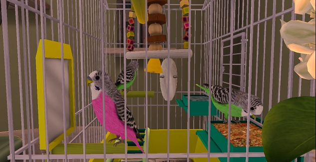 Taelor's Budgies