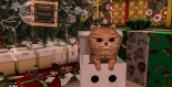 Christmas Tree_005