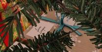 Christmas Tree_039